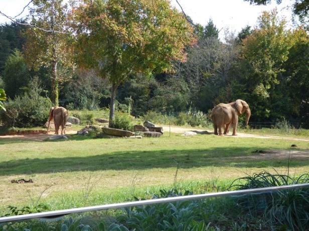 nc-zoo-elephant-original
